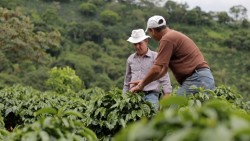 Starbucks C.A.F.E Practices (C.A.F.E là Coffee And Farmer Equity)